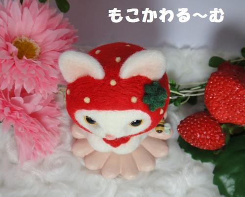 苺マト白猫5