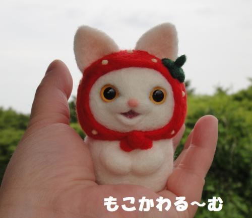苺マト白猫6