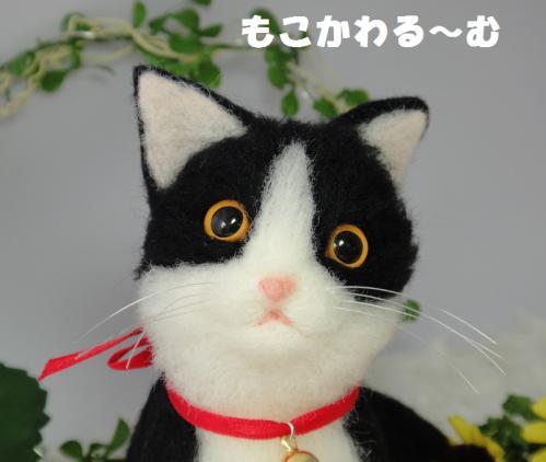 子猫はちわれ6