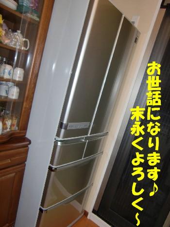 新冷蔵庫さん