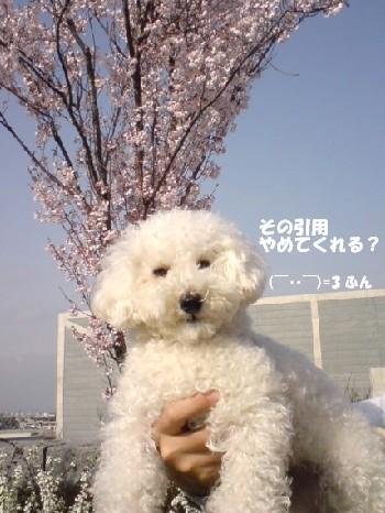 桜 &みゆさん