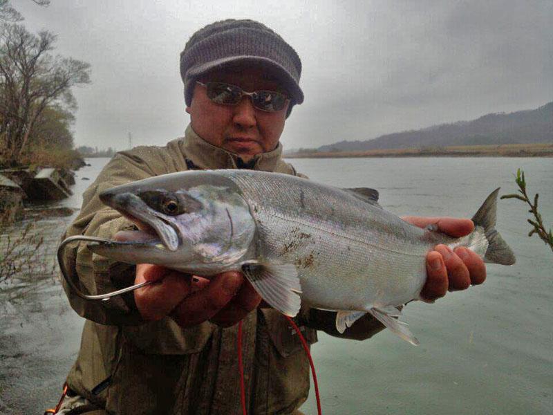 2013荒川サクラマス釣り 新潟村上 いそべの若大将