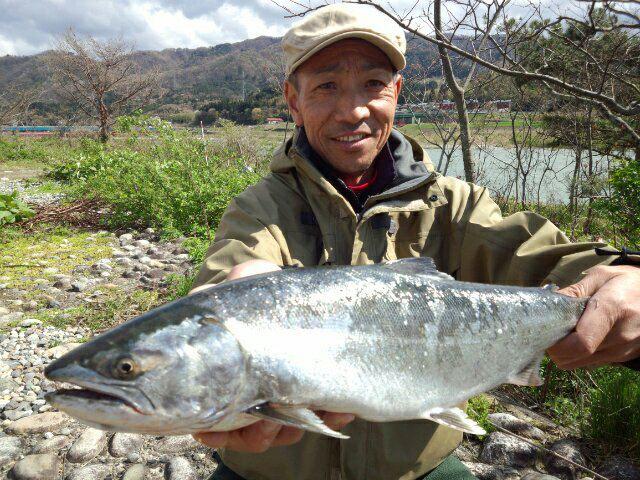 荒川サクラマス釣り(新潟村上)