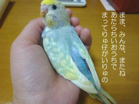 P1050209_convert_20100422015729.jpg