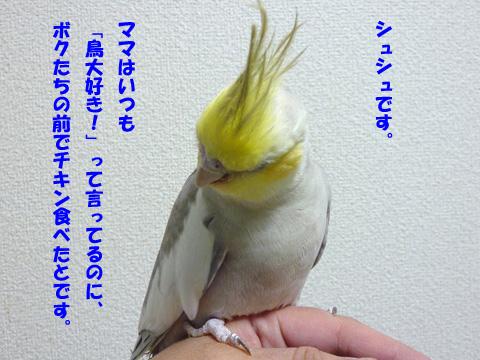 P1110388-2.jpg