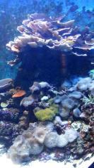サンゴ水槽右側
