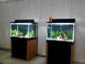 淡水魚コーナー①