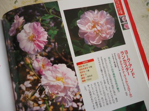 akabara-shirobara.jpg