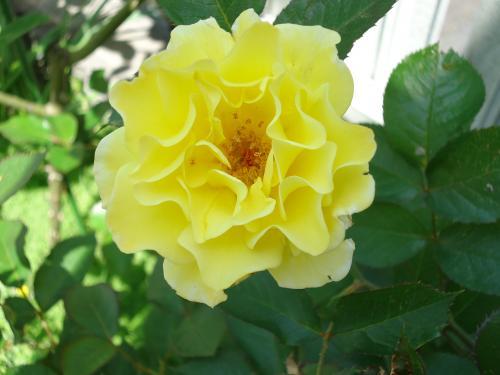 bara-yellowsubmarine.jpg