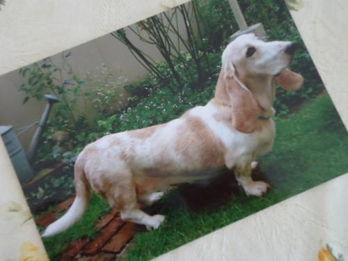 basset-hound-nana.jpg