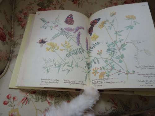 gardendiary-july.jpg