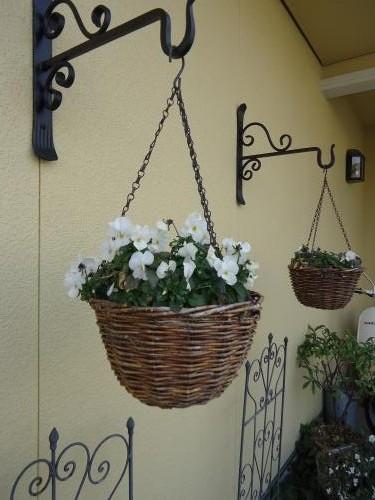 hangingbasket-viola.jpg