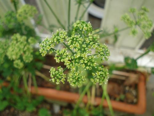 parslay-kaika.jpg