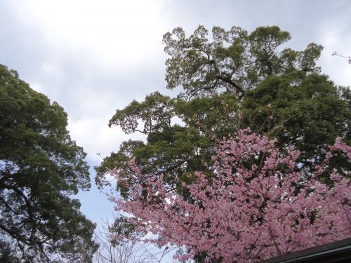 sakura-saiteta.jpg