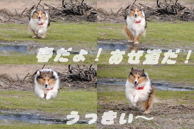 DSC_123000-12.jpg