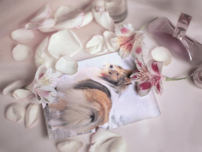 PhotoFunia-aa56df.jpg