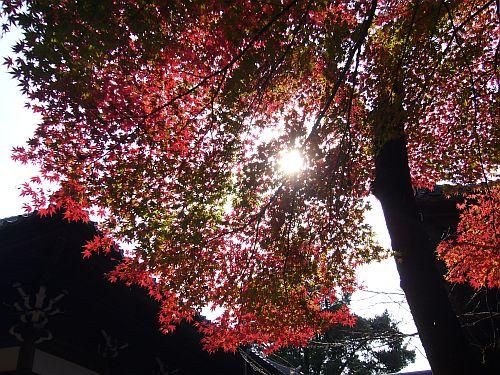 寂光院の紅葉3