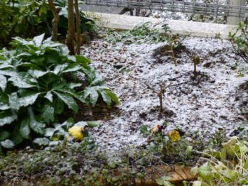 201301.14、大雪