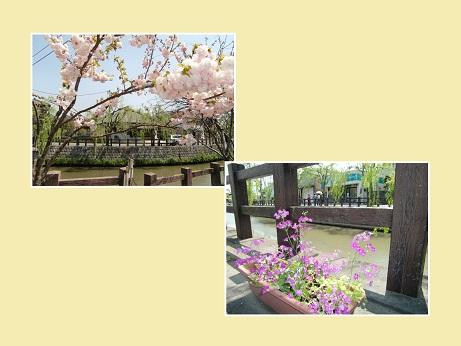 PICT0009_20100427203633.jpg