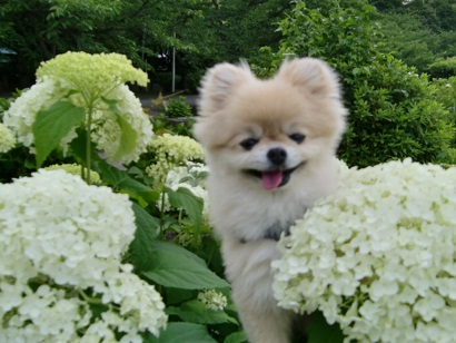 PICT0010_20110621142716.jpg