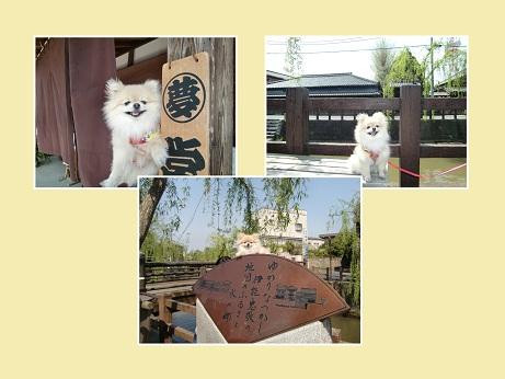 PICT0011_20100427203632.jpg