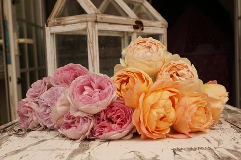 房咲きのバラたち♪