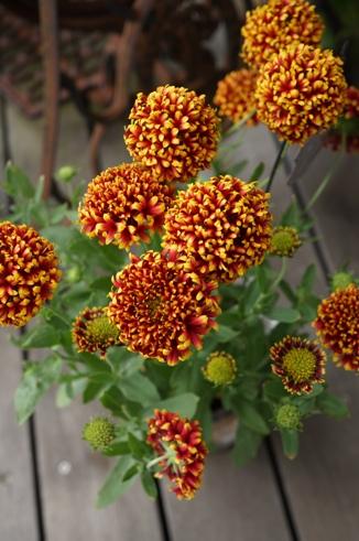 不思議な花の形~♪