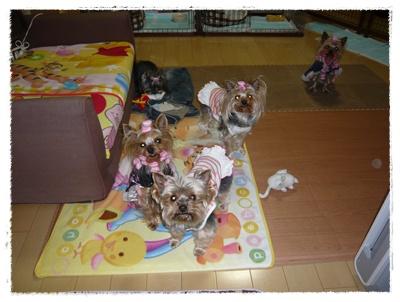 020_20110427200433.jpg
