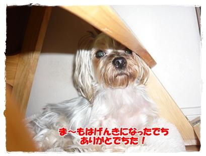 015 2010年11月19日
