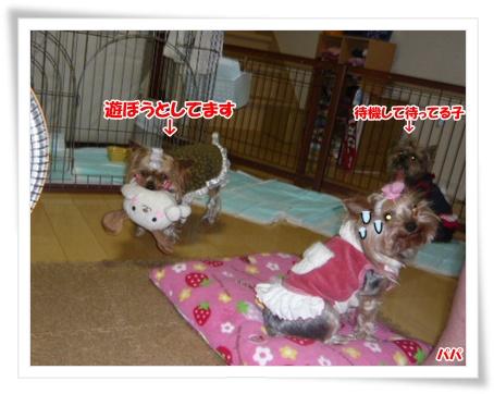 002 2011年12月19日