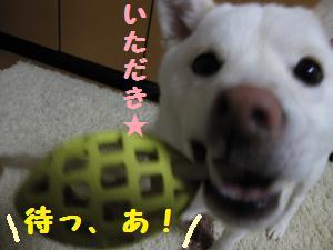 がむ6 (5)