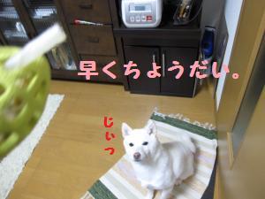 がむ6 (3)