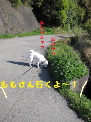 さらだ (5)