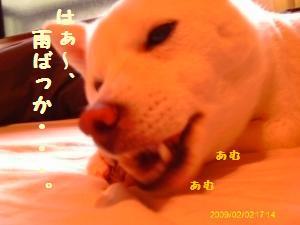 IMAG0051_convert_20100615174909.jpg