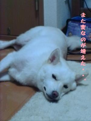 IMAG0100_convert_20100724080337.jpg