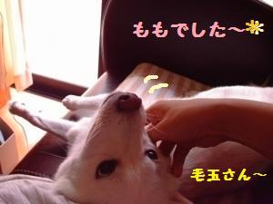 IMAG0146_convert_20100728111306.jpg
