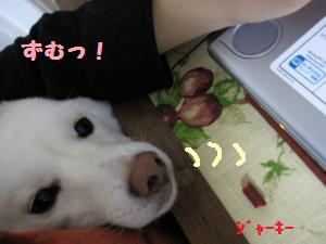 IMG_3393_convert_20100512162018.jpg