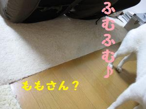 IMG_3443.jpg