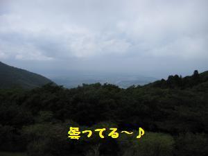 IMG_3469_convert_20100531171320.jpg