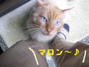 IMG_3481_convert_20100608174533.jpg