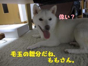 IMG_3546_convert_20100623184017.jpg