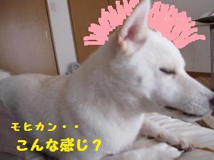 IMG_3859_convert_20101017070145.jpg