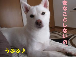 IMG_3860_convert_20101017070219.jpg