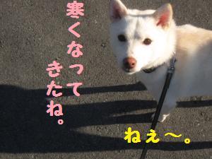 IMG_4231_convert_20101104083537.jpg