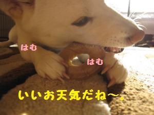 IMG_4395_convert_20110111122525.jpg