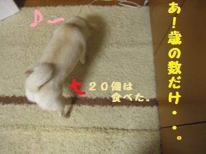 IMG_4468_convert_20110203180850.jpg