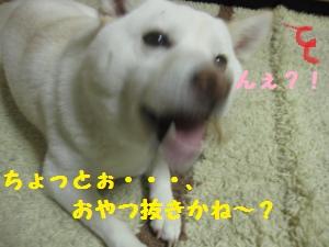 IMG_4507_convert_20110422185025.jpg