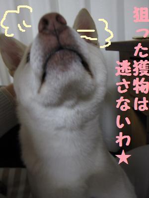 gomasen6.jpg