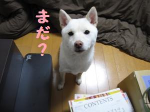 onaoshi2.jpg