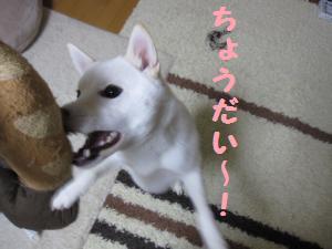 onaoshi3.jpg